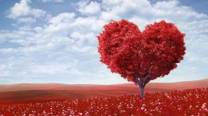 Celebra El Amor Que Das - JorgeMelende.com.mx